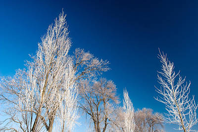 Country Scenes Photograph - Frost Covered Trees by Todd Klassy