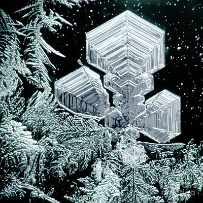 Photograph - Frost Crystal #62 by Doug Wewer