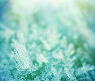 Ice Crystal Photograph - Frost Crystals by Wim Lanclus
