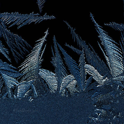 Photograph - Frost Forest 2015 by Fred Denner