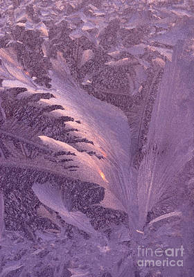 Frost Frosty Window Art Print