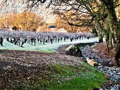 Sonoma County Photograph - Frost In The Valley by Bill Gallagher