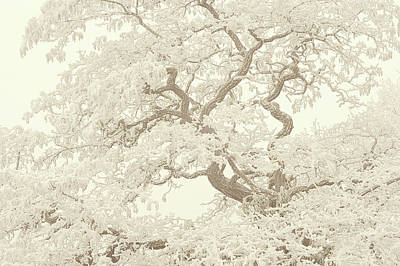 Photograph - Frost Lace On Old Twisted Tree. Gentle Winter by Jenny Rainbow