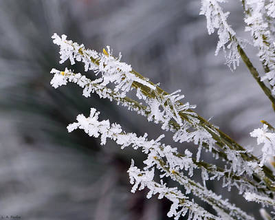 Photograph - Frost by Lauren Radke