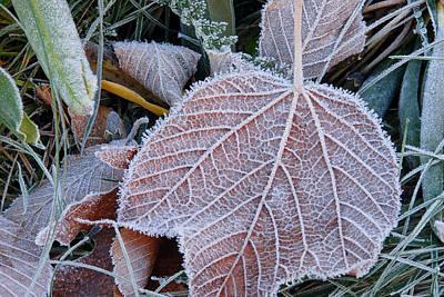 Photograph - Frost Leaf by Joye Ardyn Durham