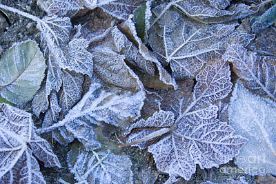 Photograph - Frost by Idaho Scenic Images Linda Lantzy