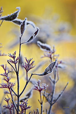 Photograph - Frost Of Dawn Leaf Art by Christina Rollo