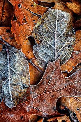 Animal Watercolors Juan Bosco - Frost on leaves #1 by Steve Gravano