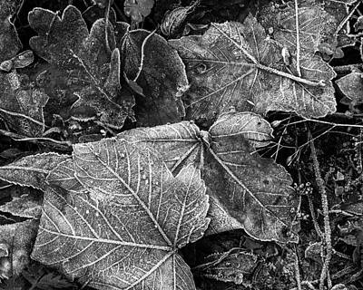 Photograph - Frost On Leaves In Black And White by Leah Palmer