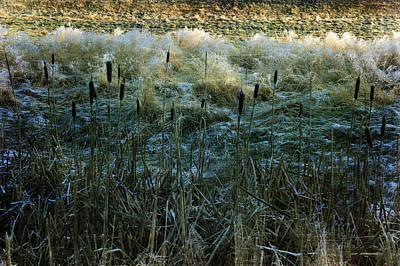 Photograph - Frost On The Ground by Randi Grace Nilsberg
