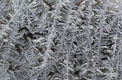 Photograph - Frost On Window by Tamara Becker
