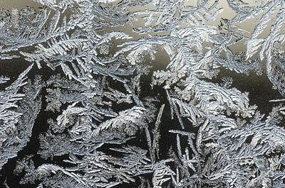 Photograph - Frost Patterns On A Window by Tamara Becker
