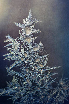 Fractal Photograph - Frost by Scott Norris