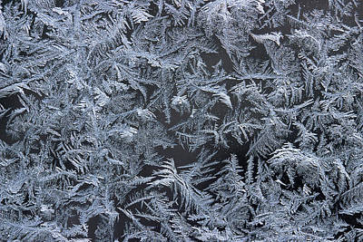 Photograph - Frost Series 11 by Mike Eingle