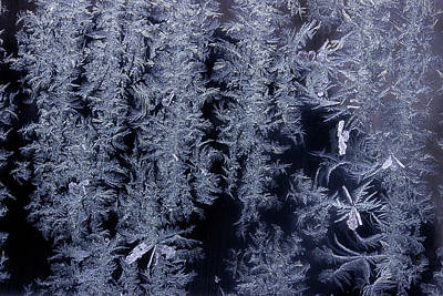 Photograph - Frost Series 3 by Mike Eingle
