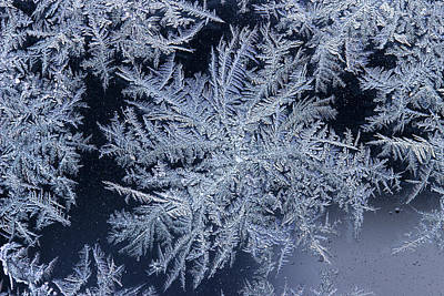 Photograph - Frost Series 9 by Mike Eingle