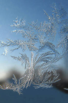 Photograph - Frost Tree by Victor Kovchin