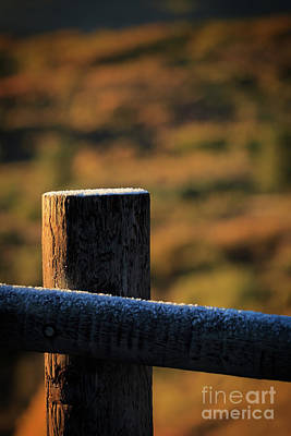 Photograph - Frostbitten Fencepost by Doug Sturgess