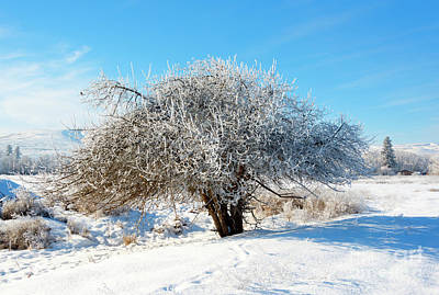 Sparrow Photograph - Frosted Apple Tree by Mike Dawson