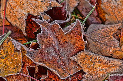 Photograph - Frosted Autumn Leaves by Kerri Farley