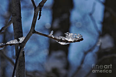 Photograph - Frosted Beauty by Cendrine Marrouat