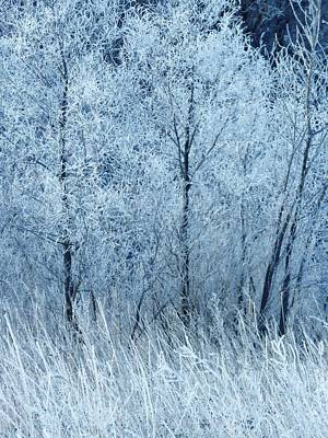 Photograph - Frosted Beauty by Lori Frisch