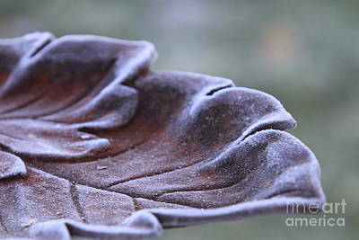 Photograph - Frosted Bird Bath by Kathy DesJardins