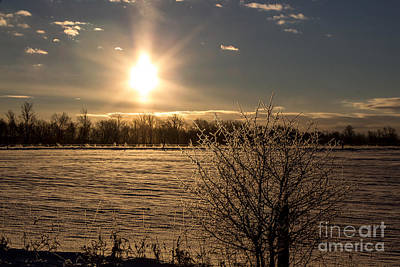 Wall Art - Photograph - Frosted Branches And Sunrise by Marj Dubeau
