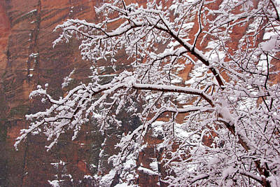 Photograph - Frosted Branches by Daniel Woodrum