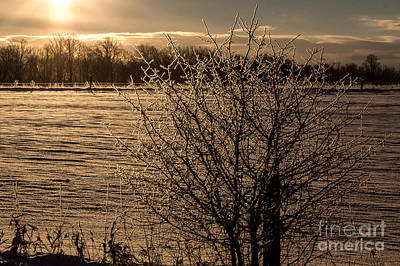 Wall Art - Photograph - Frosted Branches by Marj Dubeau