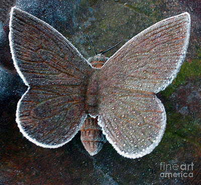 Photograph - Frosted Butterfly by Kathy DesJardins