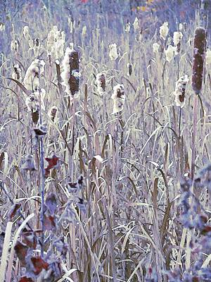 Frosted Cattails In The Morning Light Original