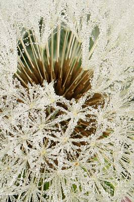 Photograph - Frosted Clock by Frank Townsley