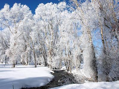 Photograph - Frosted Cottonwoods by DeeLon Merritt