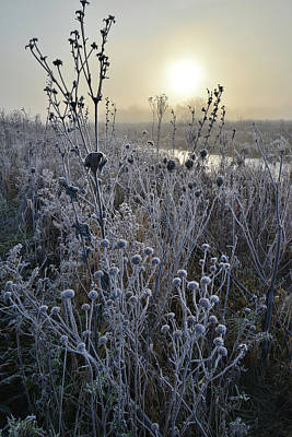Photograph - Frosted Fall Wildflowers Along Nippersink Creek by Ray Mathis