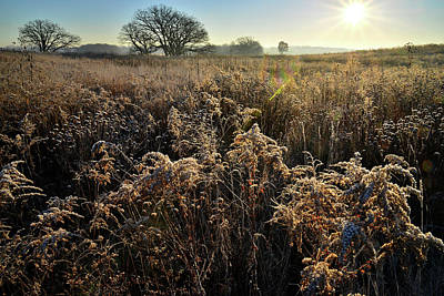 Photograph - Frosted Field At Prairieview Education Center by Ray Mathis
