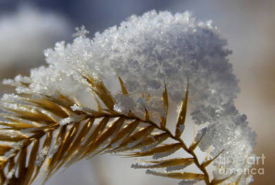 Photograph - Frosted Flakes by Marty Fancy