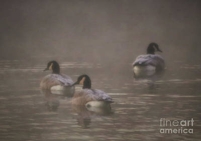 Photograph - Frosted Geese by Elizabeth Winter