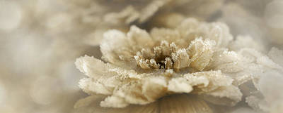 Photograph - Frosted Gold by Lori Deiter
