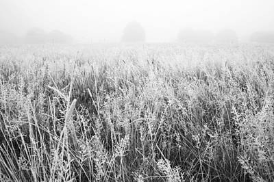 Photograph - Frosted Grass Monochrome by Marek Stepan