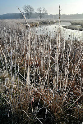 Photograph - Frosted Grasses Along Nippersink Creek by Ray Mathis