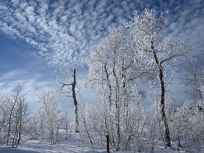 Photograph - Frosted Hilltop Quakies by DeeLon Merritt