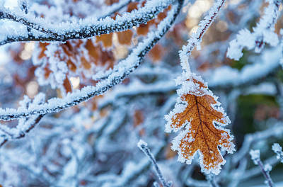 Photograph - Frosted Leaf by Jonathan Nguyen