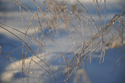 Photograph - Frosted Lines by Randi Grace Nilsberg