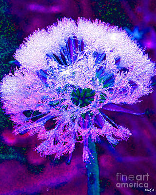 Frosted Art Print by Nick Gustafson