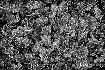 Photograph - Frosted Oak Leaves Pattern by Tim Gainey
