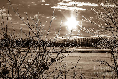 Wall Art - Photograph - Frosted Tips by Marj Dubeau