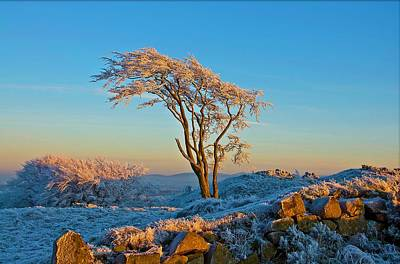 Frosted Tree Print by Mark Denham