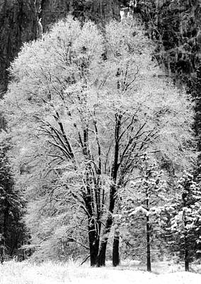 Frosted Tree Yosemite Valley  Art Print by Lawrence Knutsson