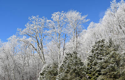 Photograph - Frosted Trees Blue Sky 1 by Gary Smith